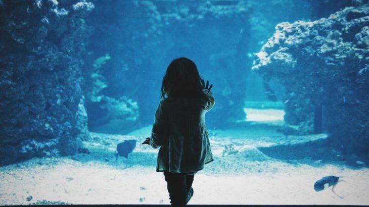 関東周辺で誕生日特典がある水族館まとめ【2019年版】