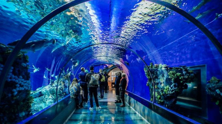 九州・沖縄で誕生日特典がある水族館まとめ【2019年版】