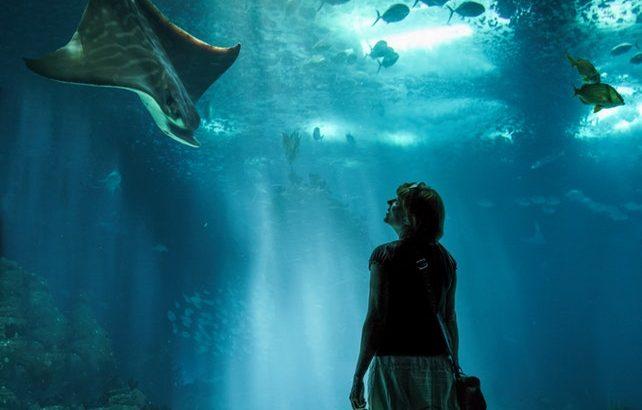 関西周辺で誕生日特典がある水族館まとめ【2019年版】